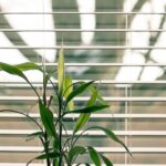 5 Common Blinds You Can Afford On A Budget