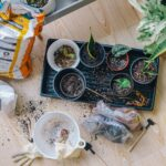 5 Tips to Begin Home Gardening